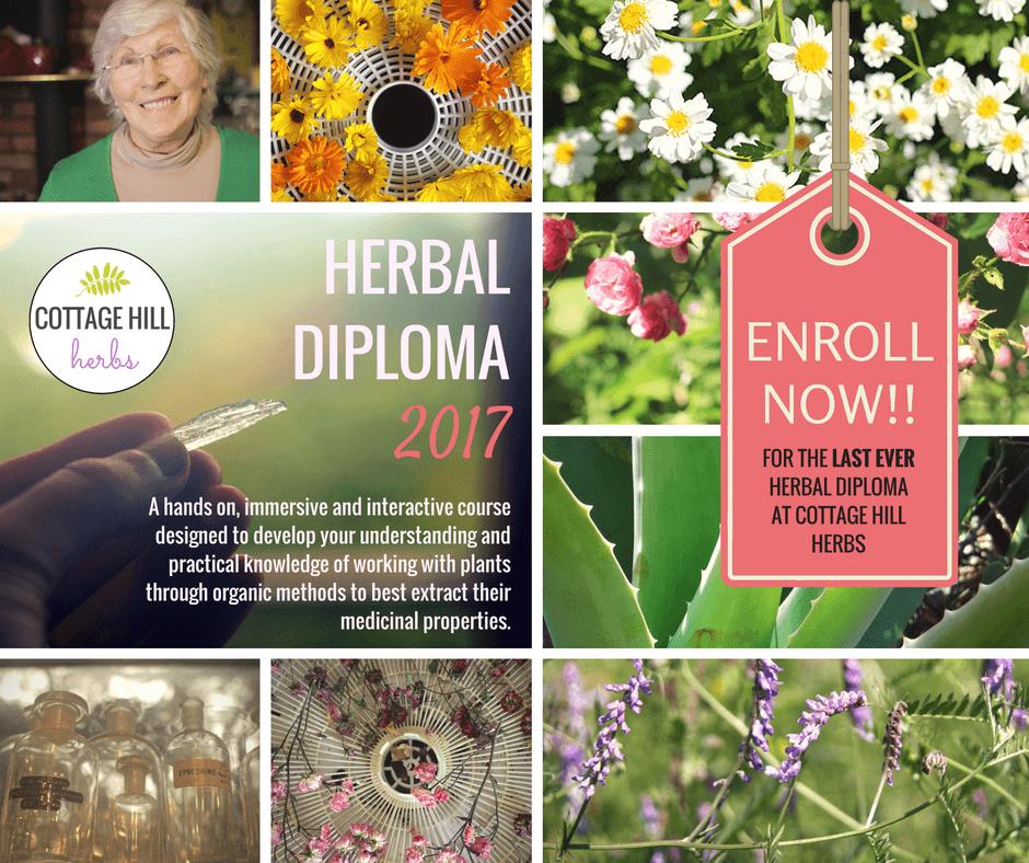 herbal-diplima-for-slider-enroll-now